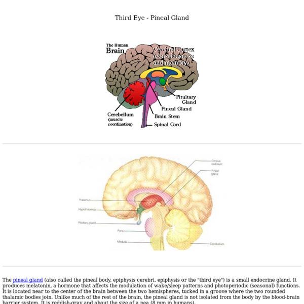 Third Eye - Pineal Gland