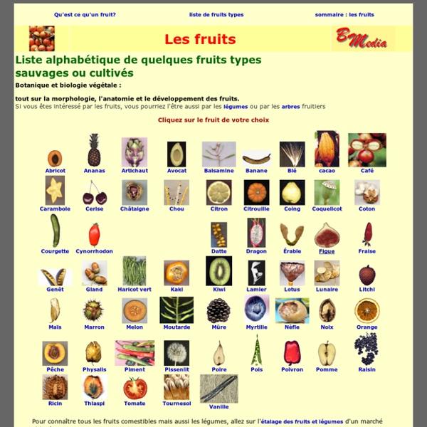Les fruits sauvages ou cultivés