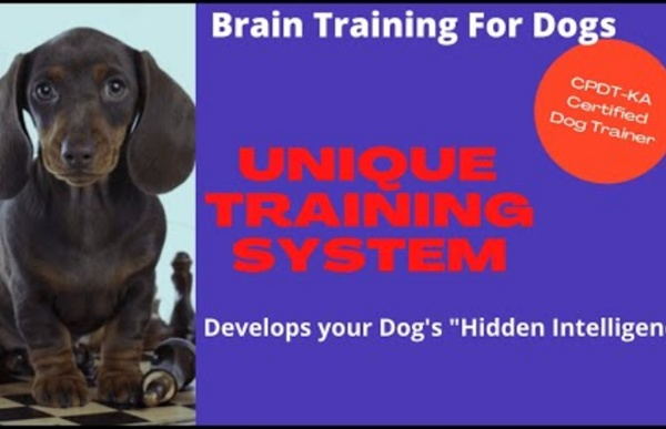 Dog Training Collar Will Help To Improve Dog Behavior