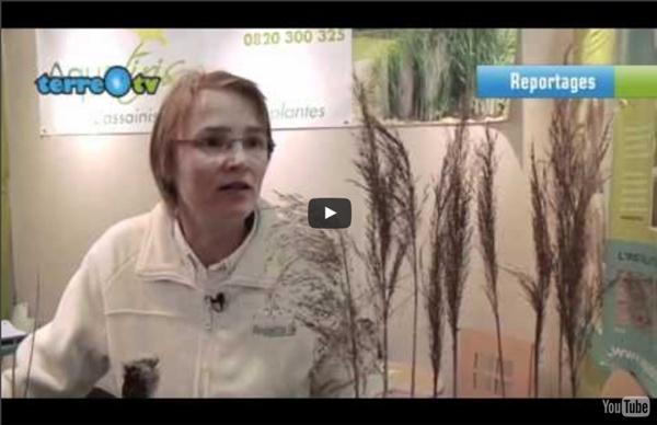Traiter ses eaux usées par les plantes, mode d'emploi Phyto-épuration