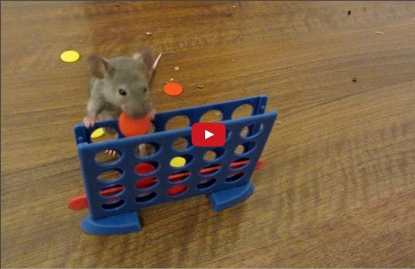 Mice Olympics