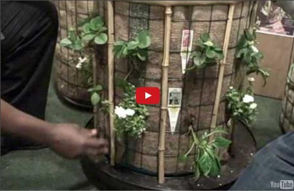 Phytopod Container Garden