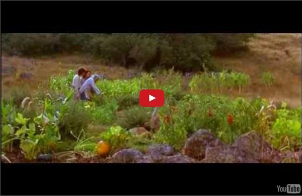 """1""""29'28 FILM LA BELLE VERTE 1996 de Coline Serreau"""