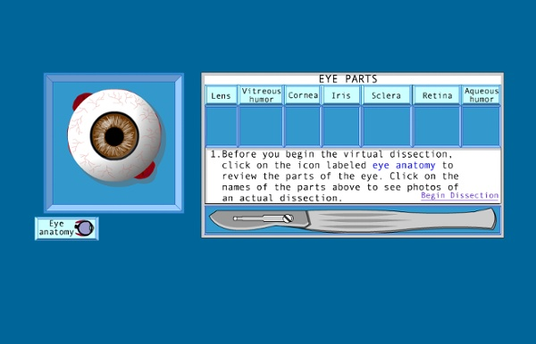 Virtual eye Dissection: The Anatomy of an Eye