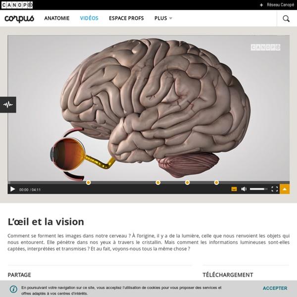 L'œil et la vision - Corpus - réseau Canopé