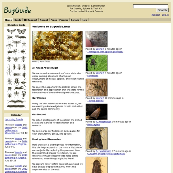 Welcome to BugGuide.Net!