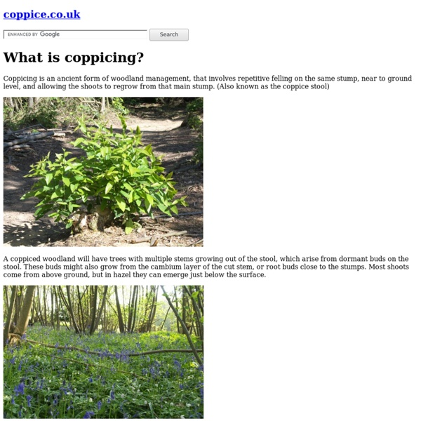 What is coppicing?