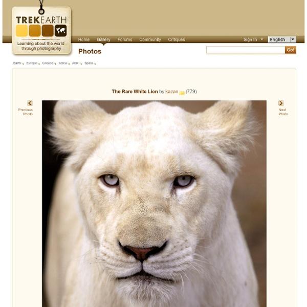 The Rare White Lion, a photo from Attiki, Attica