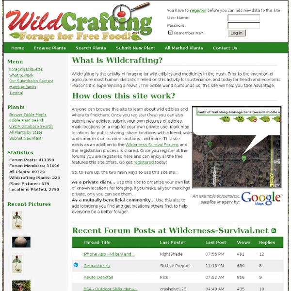 Wildcrafting.net: Foraging Database, Edible & Medicinal Plants