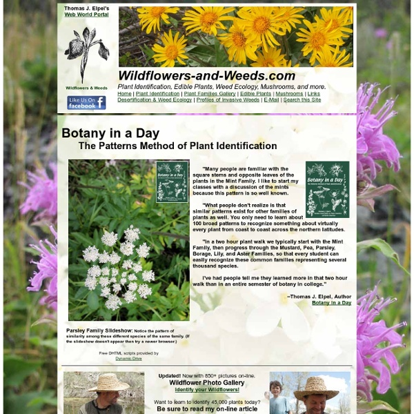 Wildflowers & Weeds: Learn To Identify Wildflowers With Botany In A Day