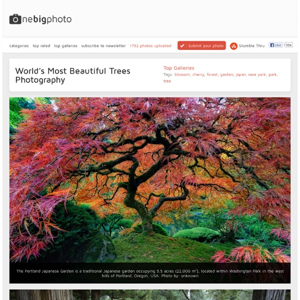 World's Most Beautiful Trees Photography - One Big Photo
