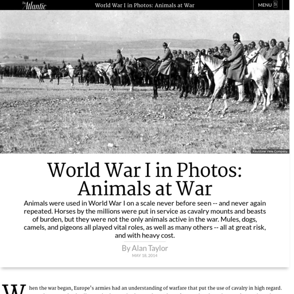 World War I in Photos: Animals at War