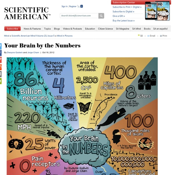 Your Brain by the Numbers
