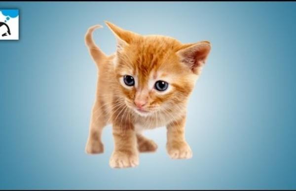 08 - Pourquoi internet est-il le royaume des chats - e-penser