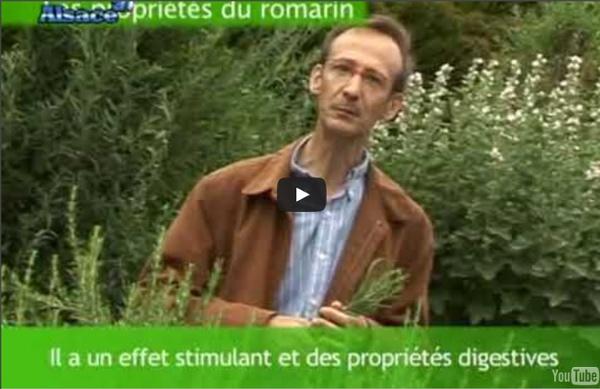 Les propriétés du Romarin