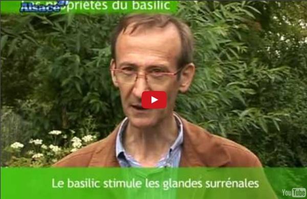 Les secrets du Basilic