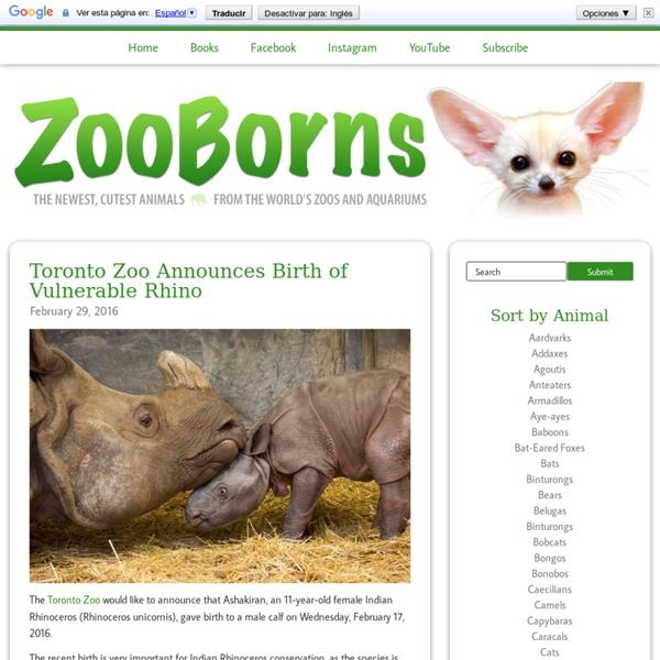 ZooBorns