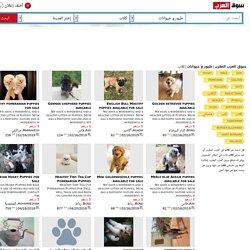 كلاب طيور و حيوانات سوق العرب المغرب ص1