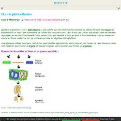 1 La vie pluricellulaire