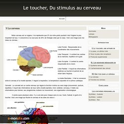 1/ Le cerveau - Le toucher, Du stimulus au cerveau