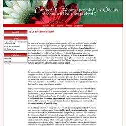 1) Le système olfactif