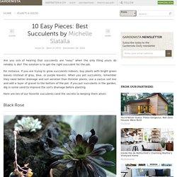 10 Easy Pieces: Best Succulents