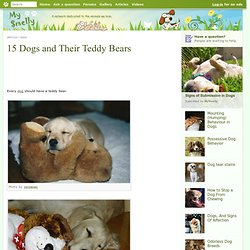 15 Dogs and Their Teddy Bears