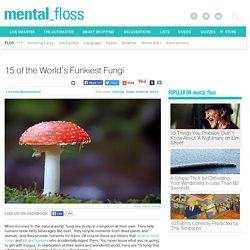 15 of the World's Funkiest Fungi