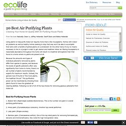 20 Air Purifying Plants