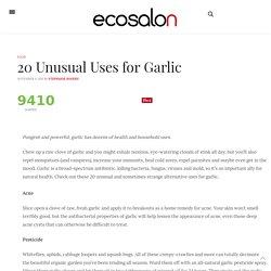 20 Uses for Garlic : EcoSalon