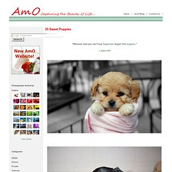 25 Sweet Puppies - AmO Images: Capturing the Beauty of Life - AmO Images: Capturing the Beauty of Life