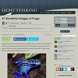 Light Stalking » 27 Wonderful Images of Frogs