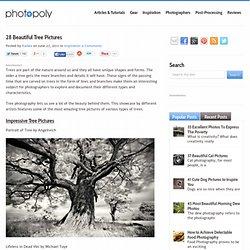 28 Impressive Tree Pictures