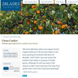 2BLADES FOUNDATION - OCT 2016 - Citrus Canker - Multipronged approach to combat citrus disease