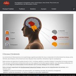 3 Cerveaux 3 fondements