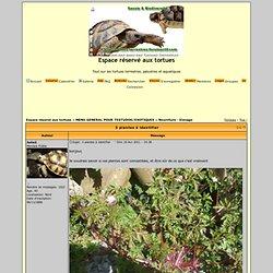 3 plantes à identifier