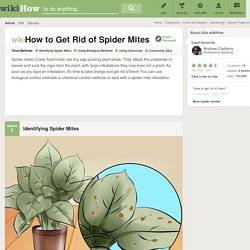3 Ways to Get Rid of Spider Mites