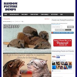 30 Funny Animals