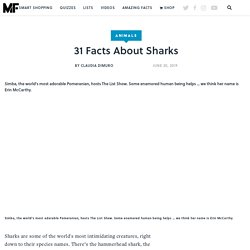 31 Facts About Sharks