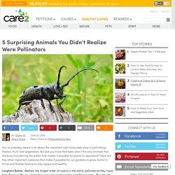 5 Animals That Are Pollinators