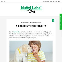 5 Doggie Myths Debunked!