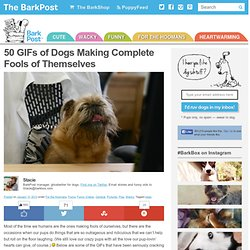 50 Funny Dog GIFs