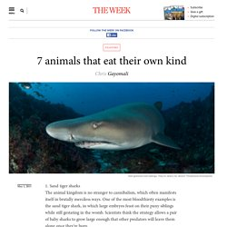 7 animals that eat their own kind