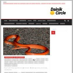 दुधवा टाइगर रिज़र्व में 82 साल बाद एक बार फिर से देखने को मिला रेड कोरल कूकरी सांप - Dainik Circle