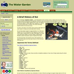 A Brief History of Koi