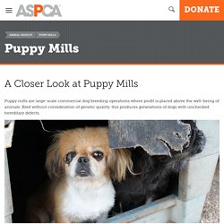 A Closer Look at Puppy Mills