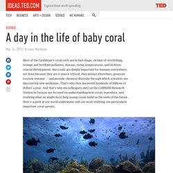 A day in the life of baby coral