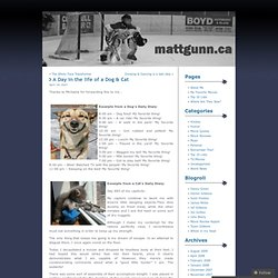 A Day in the life of a Dog & Cat « MattGunn.ca