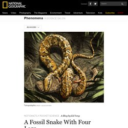 A Fossil Snake With Four Legs