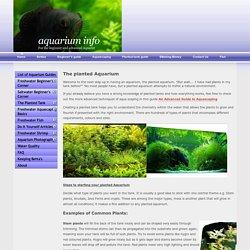 A Guide to the Planted Aquarium